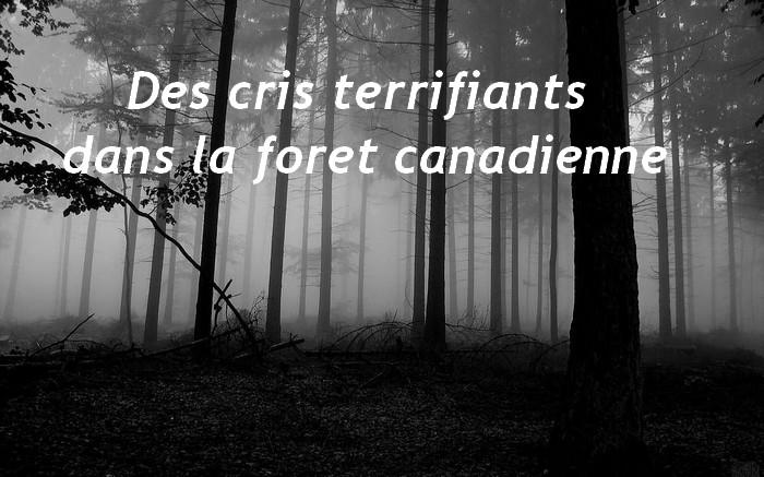 Des cris terrifiants dans la foret canadienne
